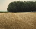 """<h5>Après la récolte, les vaches a l'ombre (résurgence)</h5><p>Oil on canvas, 47¼"""" x 59"""" (120 x 150cm)</p>"""