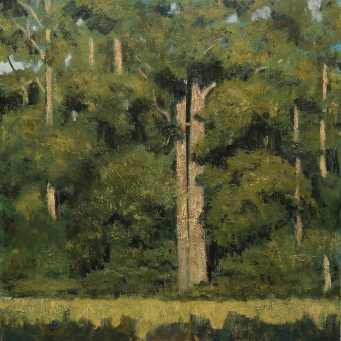 Oil on canvas painting of a forest of trees at the edge of a sunny spot of meadow by Albert Hadjiganev titled Clairière.